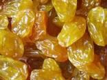 Экспортируем изюм из Чили - фото 1