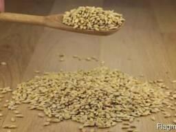 Ячмень, Кукуруза - photo 2